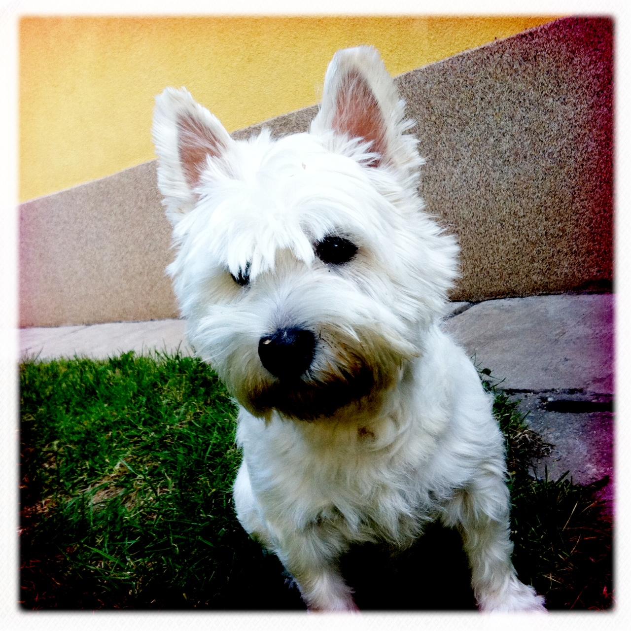 Zaza, the dog!